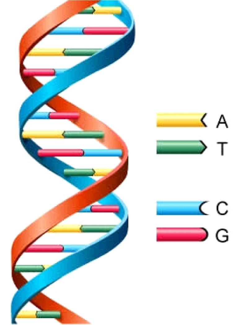 is it right to use genetic Start studying ethics we have a moral obligation to use genetic the mother has a right to defend herself against the unborn's use of her body (a right.